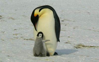 Google Penguin y backlinks